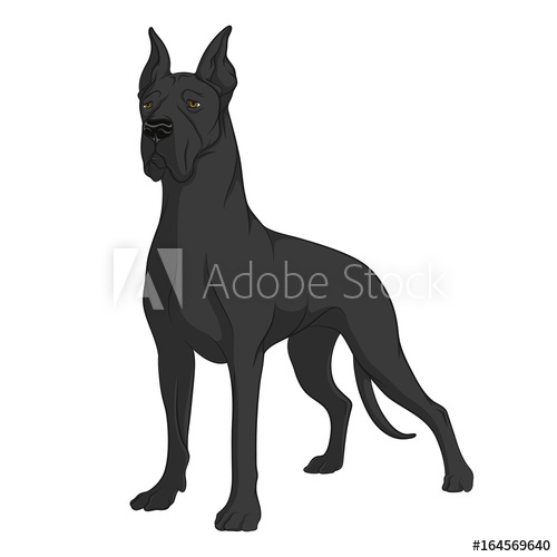 500x500 Color Image Of A Black Great Dane. Isolated Vector Object On White