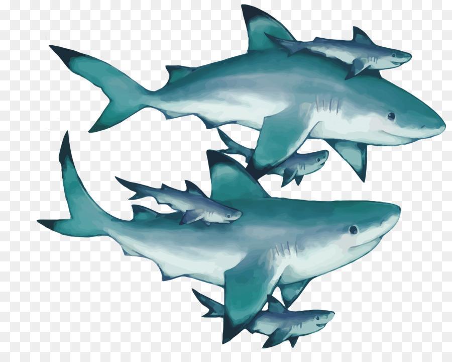 900x720 Tiger Shark Squaliformes Great White Shark Lamniformes