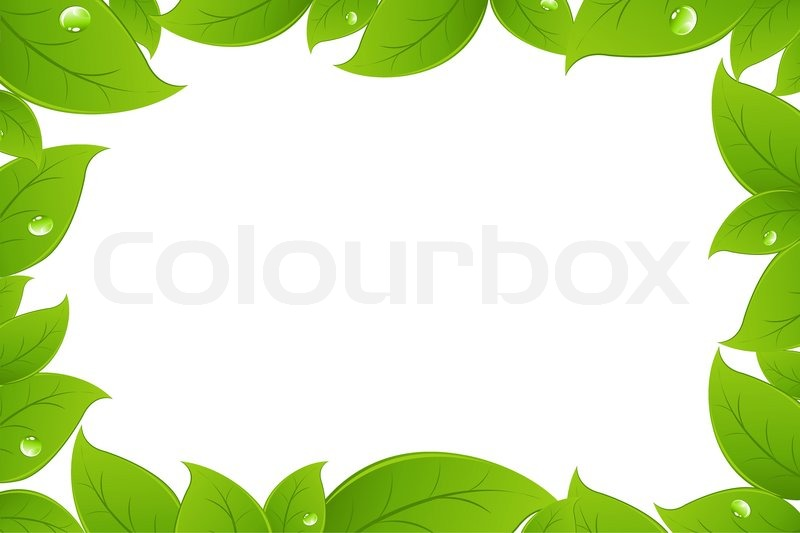 800x533 Green Leaves Background, Isolated On White Background, Vector