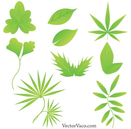 456x448 Free Green Leaf Clipart And Vector Graphics