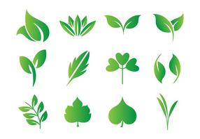 286x200 Green Leaf Vector