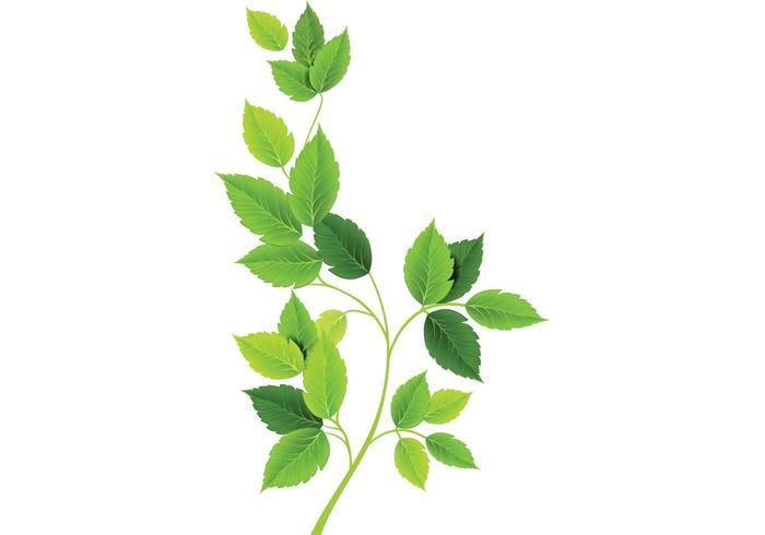 700x490 Green Leaves Vectors
