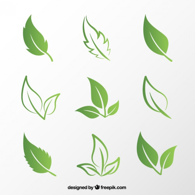 626x626 Green Leaves Vector Free Download