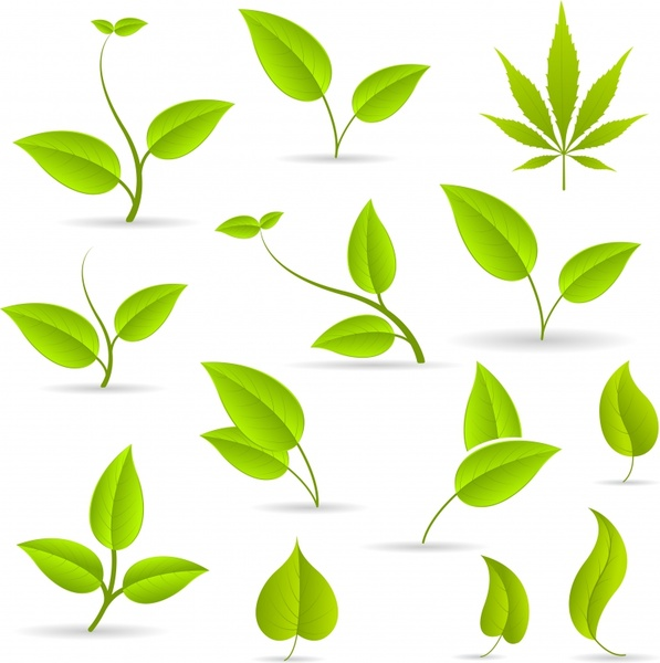 597x600 Green Leaves Green Leaves Vector Free Vector In Encapsulated
