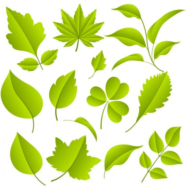 626x624 Green Leaves Vector Graphic Set Vector Free Download