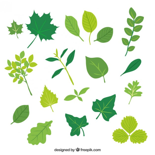 626x626 Leaves Vectors, Photos And Psd Files Free Download