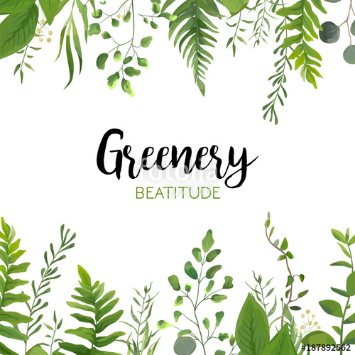 500x500 Vector Floral Greenery Card Design Forest Fern Frond, Eucalyptus