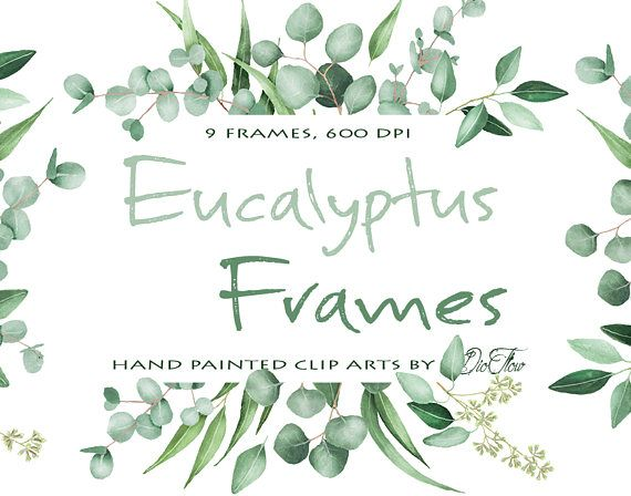 570x448 Watercolor Eucalyptus Clipart Frame Greenery Frames Clip Art