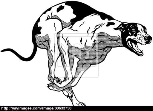 512x373 Running English Greyhound Vector
