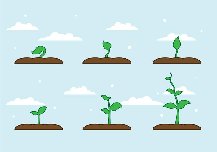 700x490 Free Plant Growth Vector