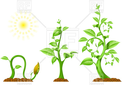 400x281 Plant Growth Vector Image Vector Artwork Of Plants And Animals
