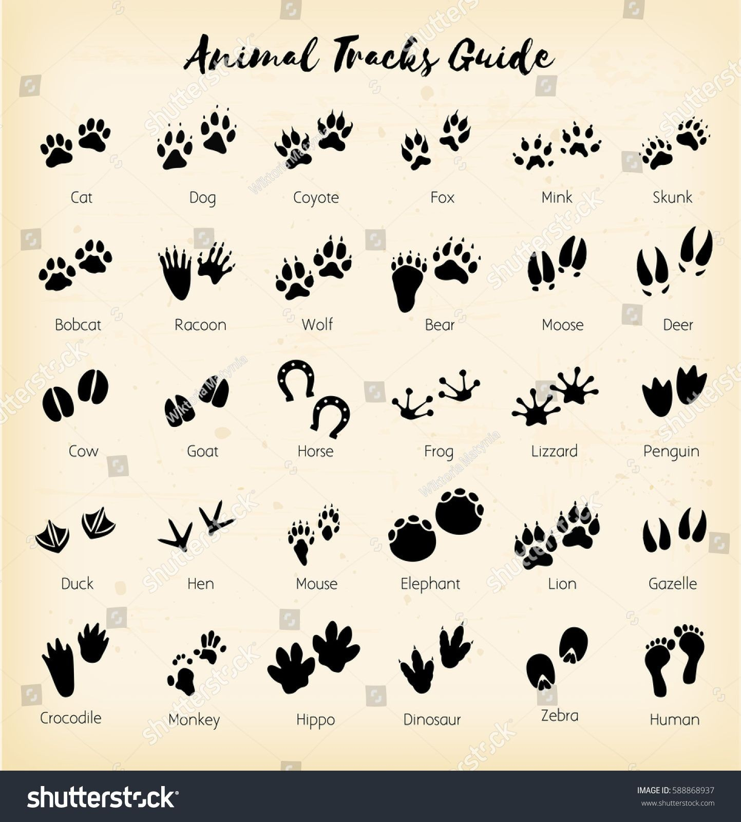 1443x1600 How To Draw Leopard Print New Animal Tracks Foot Print Guide