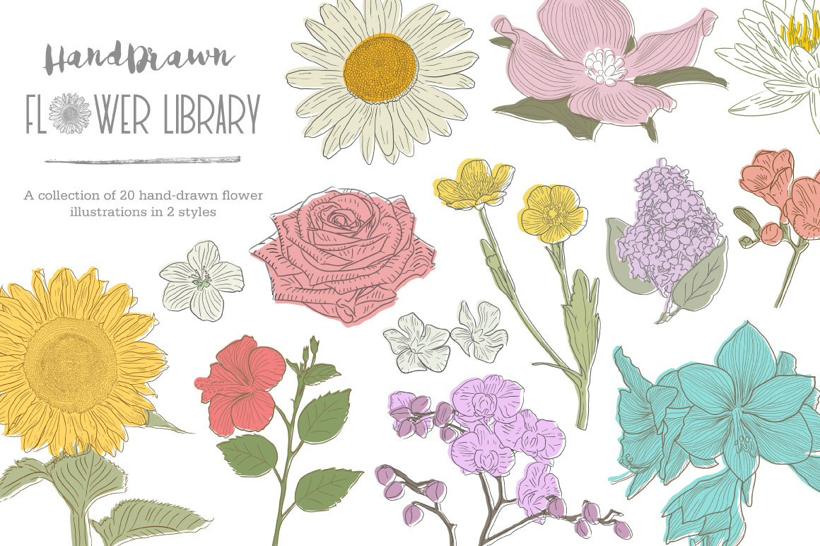1160x772 Hand Drawn Flower Library