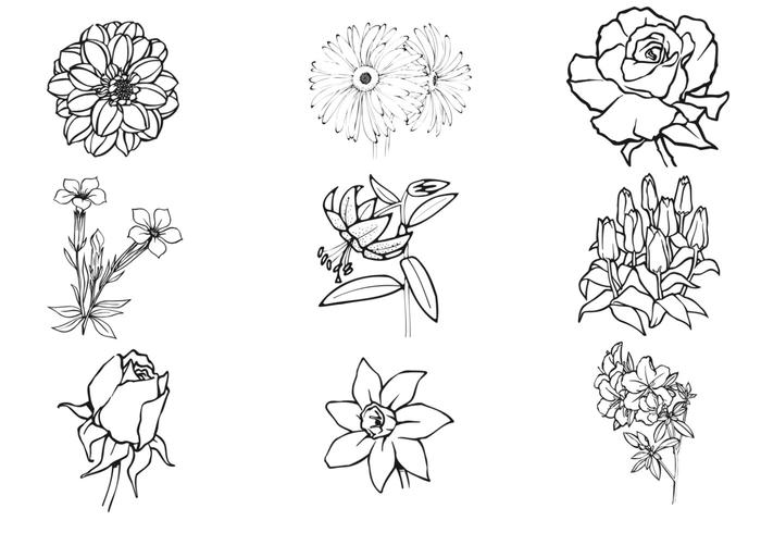 700x490 Hand Drawn Flower Vector Pack