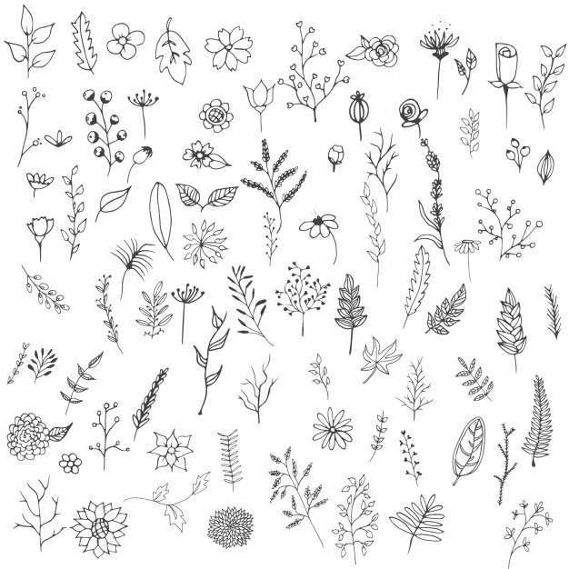 626x626 Handdrawn Flower Vectors, Photos And Psd Files Free Download