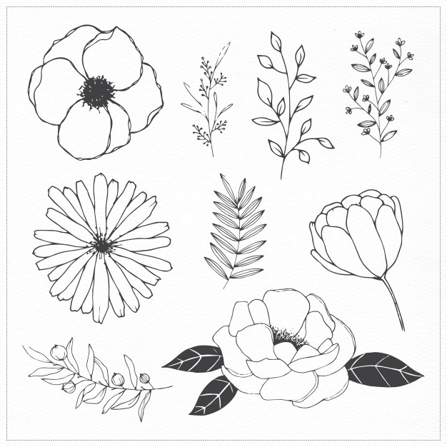 626x626 Hand Drawn Flowers And Leaves Vector Free Download