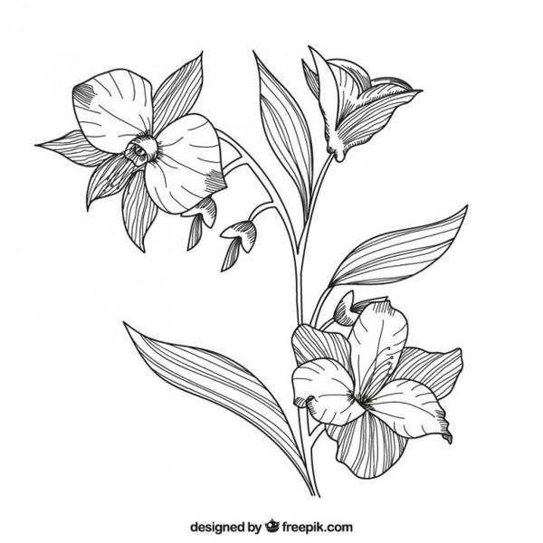 600x600 Hand Drawn Flowers Vectors Download Free Vector Art