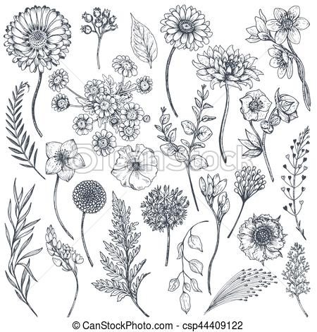 450x470 Collection Of Hand Drawn Flowers And Plants. Monochrome Vector