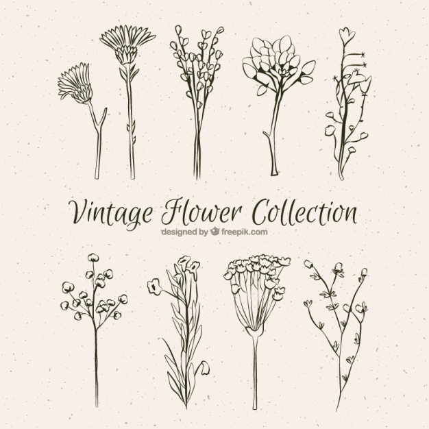 626x626 Collection Of Vintage Hand Drawn Flowers Vector Free Download
