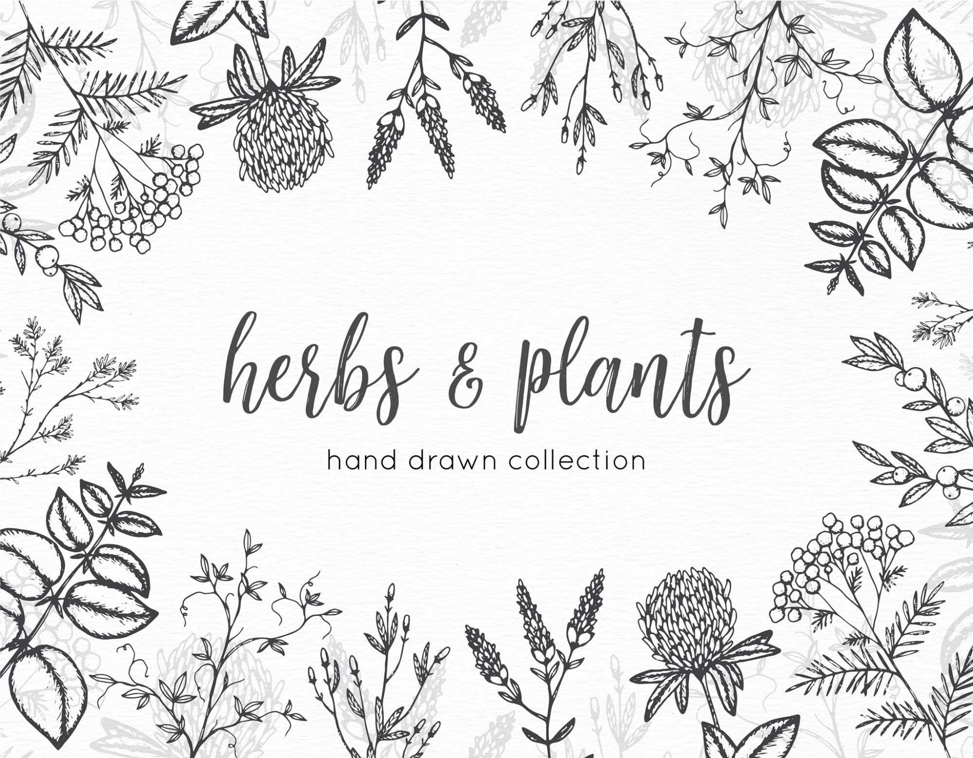 2000x1558 8 Hand Drawn Vector Graphic Herbs