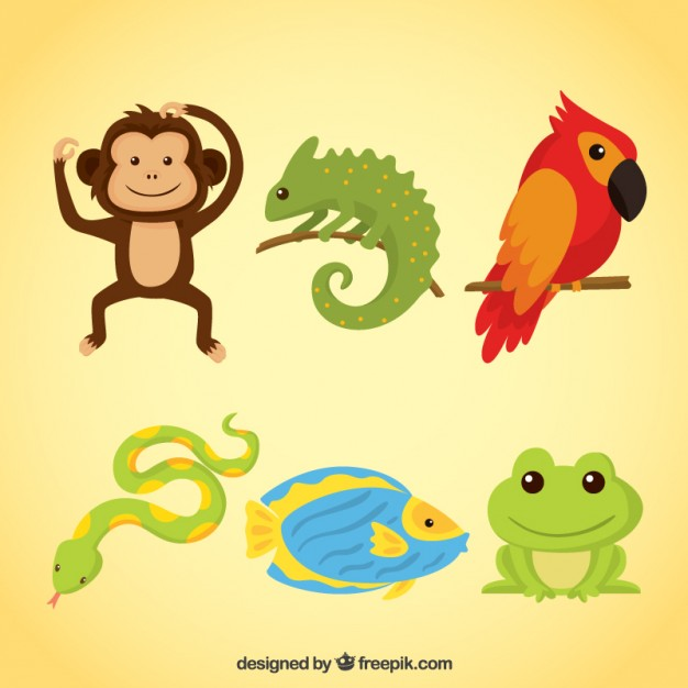 626x626 Monkey Vectors, Photos And Psd Files Free Download