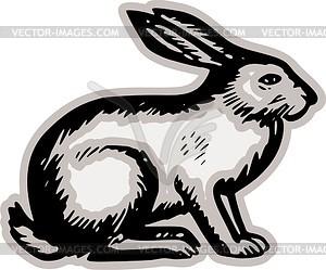 300x249 Hare
