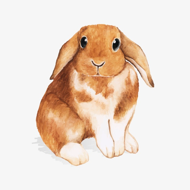 626x626 Hare Vectors, Photos And Psd Files Free Download