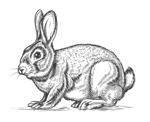 489x400 Hare On Curated Vector Illustrations, Stock Royalty Free Images