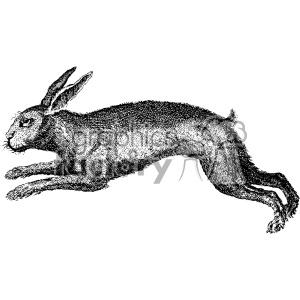 300x300 Royalty Free Vintage Rabbit Hare Vector Vintage 1900 Vector Art Gf