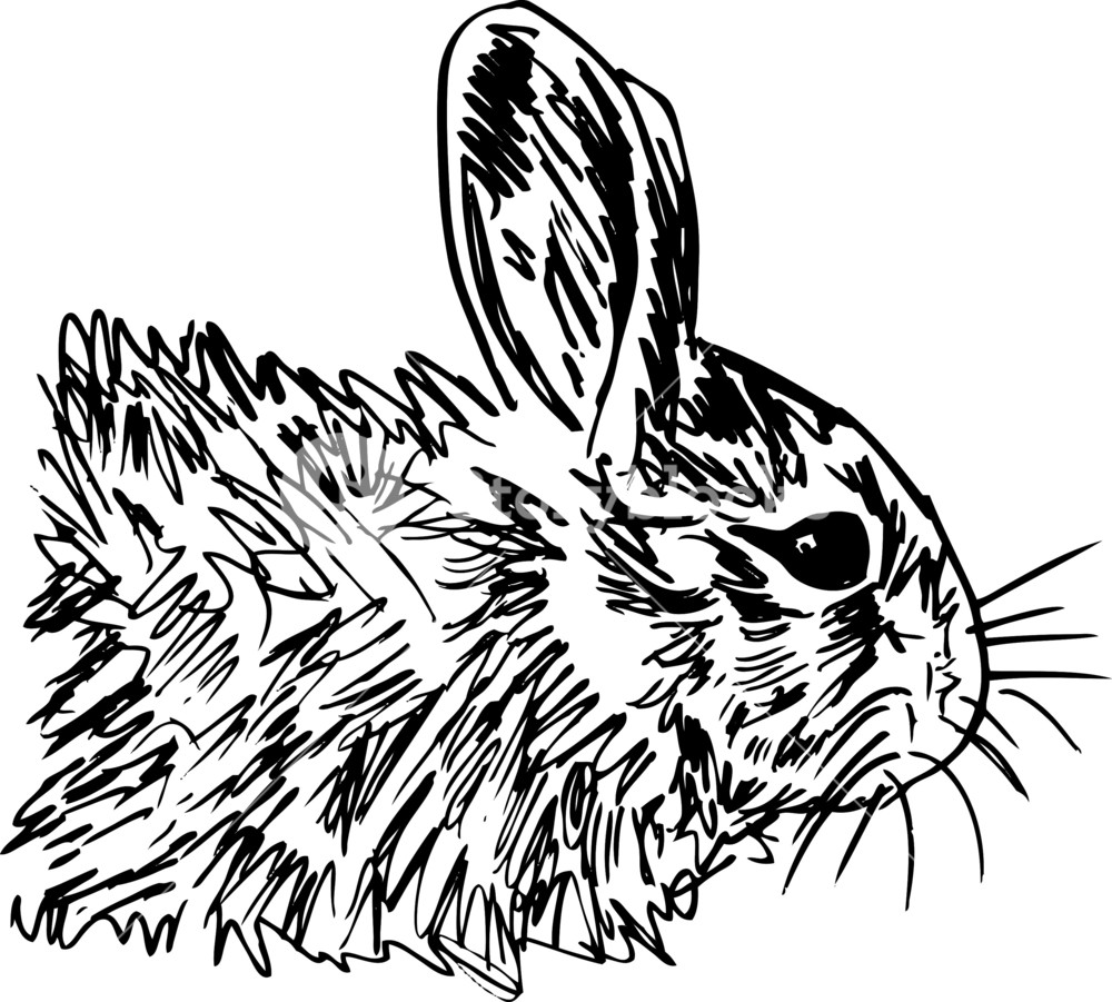 1000x901 Sketch Of Little Hare. Vector Illustration Royalty Free Stock