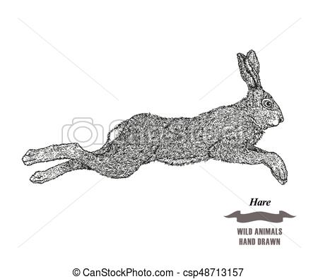 450x395 Forest Animal Jumping Hare Or Rabbit. Hand Drawn Black Ink Sketch