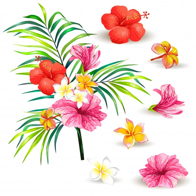 Hawaiian Flower Vector