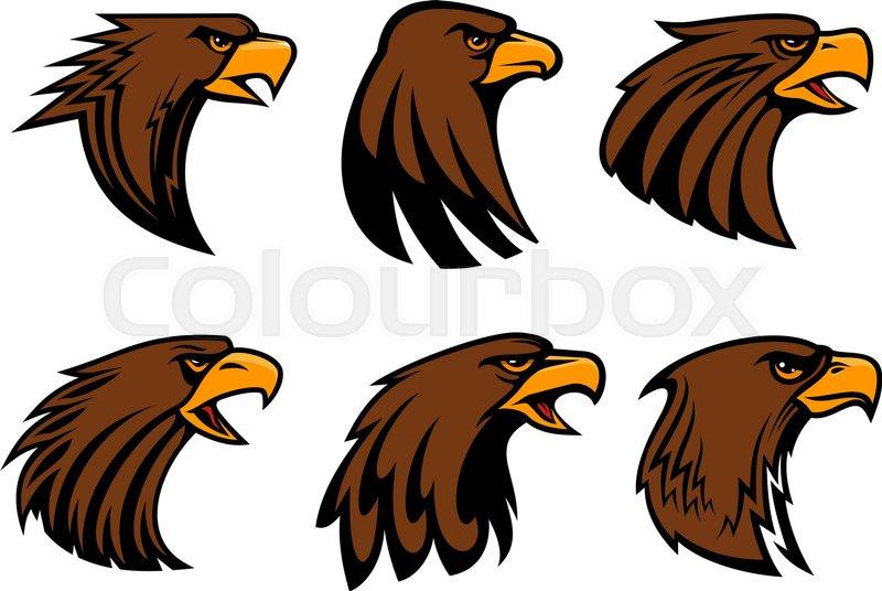 800x536 Eagle Or Hawk Vector Mascot For Sport Team Badge. Symbol Of