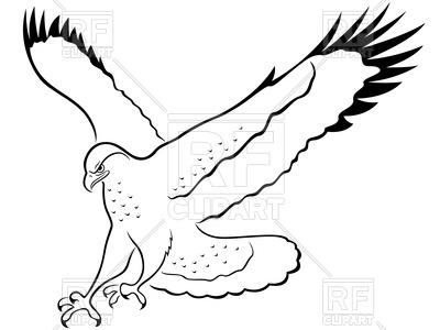 400x300 Hawk With Wide Wings