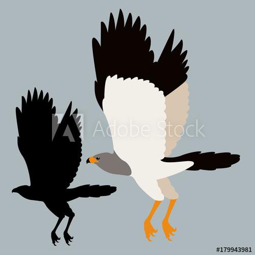 500x500 Hawk Vector Illustration Flat Style Black Silhouette Profile