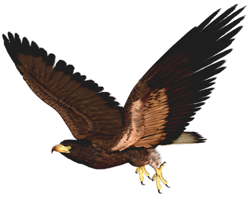 505x398 Collection Of Free Hawk Vector White Background. Download On Ubisafe