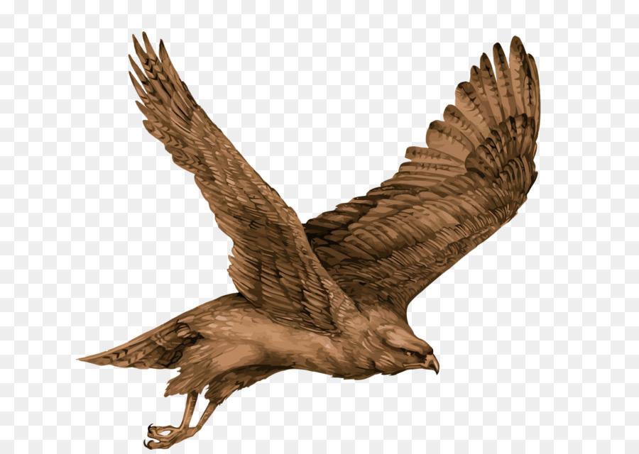 900x640 Eagle Bird Hawk
