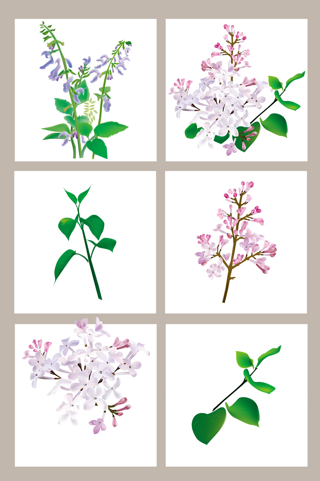 Herbs Vector Free Download