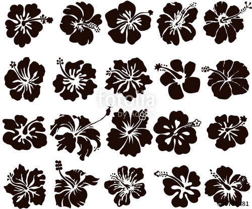 500x415 Hibiscus Flower Silhouettes Set Stock Image And Royalty Free
