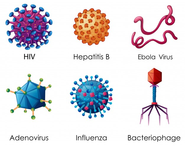626x496 Hiv Vectors, Photos And Psd Files Free Download