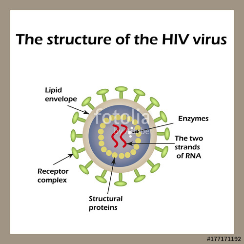 500x500 The Structure Of The Aids Virus. Hiv. Vector Illustration Stock