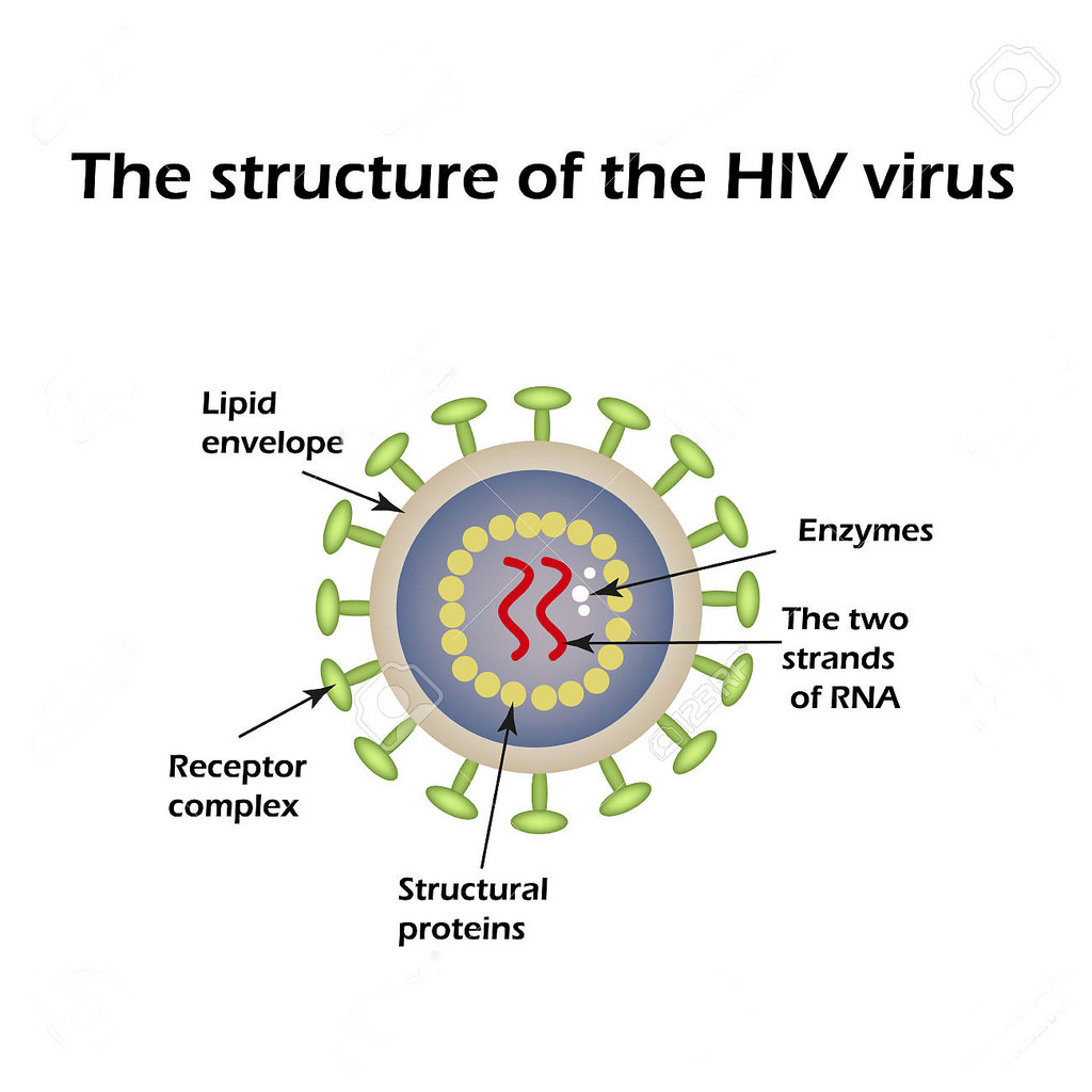 1024x1024 The Structure Of The Aids Virus. Hiv. Vector