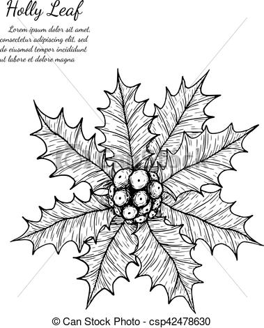 379x470 Holly Plant Isolated On White Background.holly Leaf Sketch By Hand