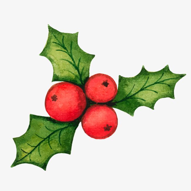 650x651 Christmas Holly Decorations Vector Material, Vector, Holly