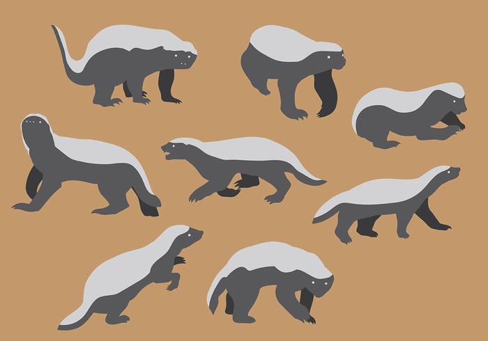 700x490 Free Honey Badger Icons Vector