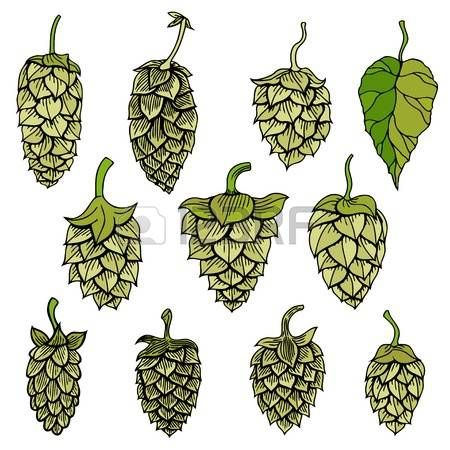 450x450 791 Hops Plant Cliparts, Stock Vector And Royalty Free Hops Plant