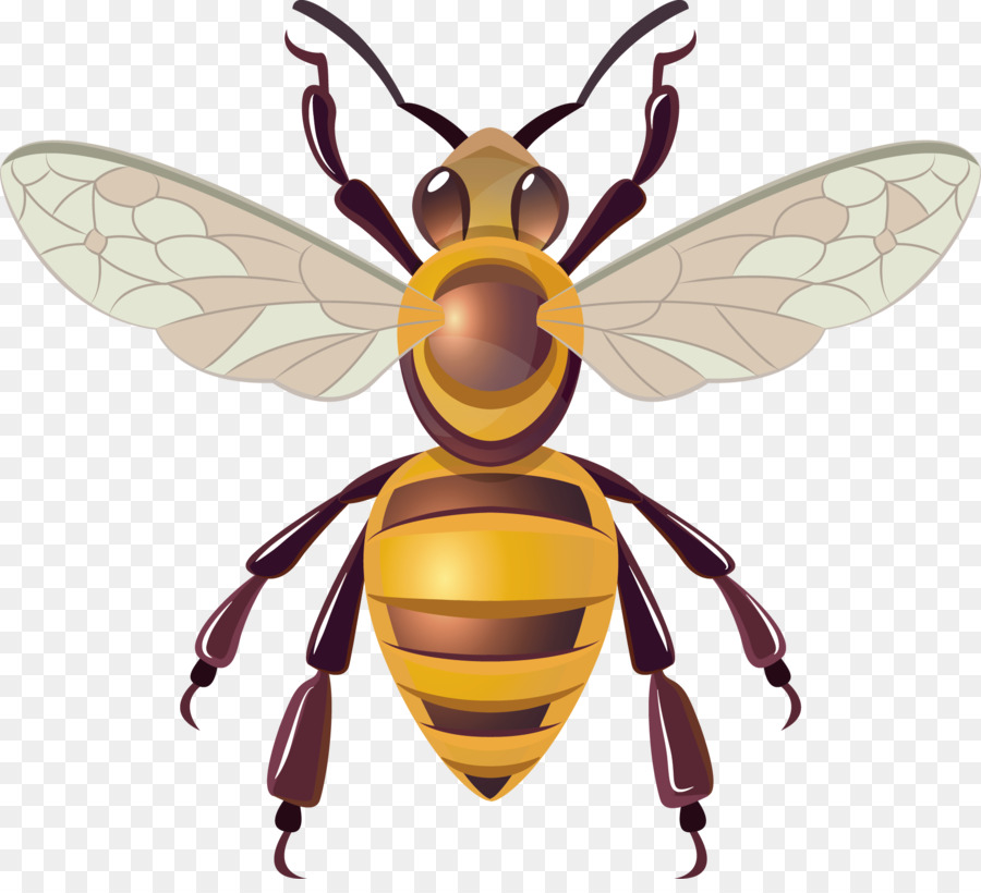 900x820 Honey Bee Hornet Insect