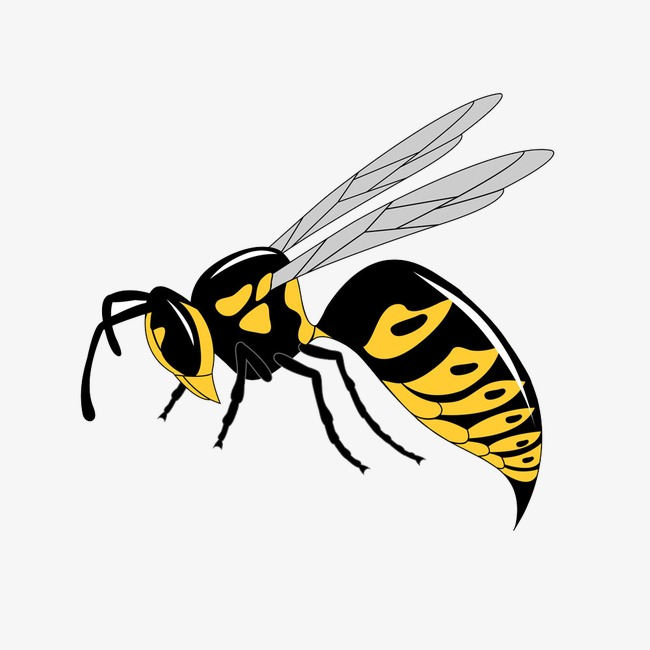 650x650 Hornet Vector, Wasp, Yellow, Vector Png And Vector For Free Download