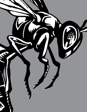 300x387 Hornet Vector Artwork Choose Top Clipart