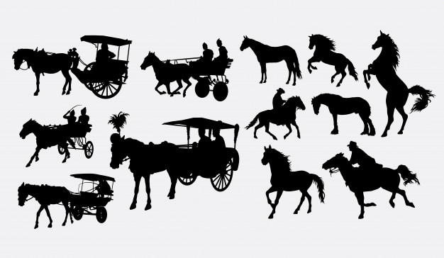 626x364 Carriage Horse Vectors, Photos And Psd Files Free Download